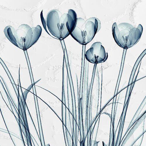 پوستر سه بعدی طرح گل کد 26